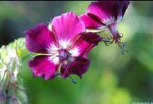 Gartenfotografie / Pflanzenfotografie / Tipps und Tricks für die perfekten Gartenfotos und Pflanzenfotos