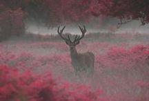 Deers♥
