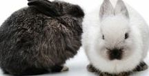 Those Rascally Rabbits / A board filled with tractor plans, healthy food, recipes, training, breeding, breed info and more - everything you need to know for raising and keeping pet or meat bunnies in your backyard or on your homestead.