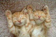 Cats!!!!!<3