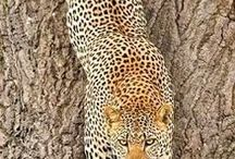wildlife / wildlife