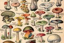 Beautiful mushrooms / Beautifull mushrooms