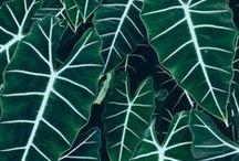 PLANT / plant