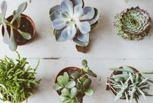 Indoor plants / Indoor greenery is essential for creating a modern bohemian feel in your home. The more of it the better! Hanging from a planter, in terracotta pots on the floor, big, small, you name it. Here are some ideas to give you some leafy inspo to get that modern boho look in your pad.
