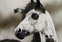 Natives horses