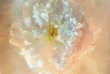 Flower/Plant