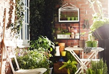 "Balcony gardening / ""Gardening is an active participation in the deepest mysteries of the universe."" ~ Thomas Berry"