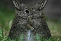 Cute animals ♥