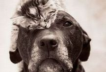 Just Like Cats & Dogs / This board isn't LIKE cats & dogs, it IS cats & dogs. Cuddling, being cute, loving each other. Enjoy.