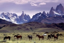 Travel Argentina / by Matite files