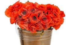 Gelincikler - Red Poppies