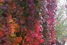 Bozcaada & Güz / Autumn / Sonbahar Bozcaada'da ise siz neredesiniz?