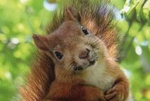 AJIDAMOOS/Squirrels