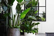 Gardens: Plant Pots / Gardening in a pot. Ideas for both indoors & outdoors.
