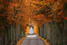 Autumn Roads Inspiration / This board serves as inspiration for this years rainy but golden season as seen from driver's view. Enjoy!