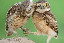 Owls! / My absolute favorite animal of all time