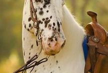 Love horses... / Picture´s from horses, etc..