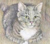 KITTENS / Some colored pencil drawings of some kittens, puppies, birds and other lovable huggable critters.