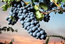 Wine / Southern Oregon vineyards, wineries and tasting rooms.  / by Mail Tribune