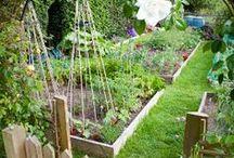 jardin, architecture et bricolage