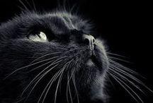 ANIMALI / Da guardare ogni tanto per sentirsi meglio