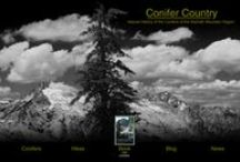Conifer Country / The most species-rich temperate coniferous forests exists in the Klamath Mountains.