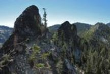 Western Conifer Destinations / Dramatic and beautiful destinations to see conifer species in western North America.