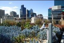 Australian green roofs / Green roofs and infrastructure from around Australia
