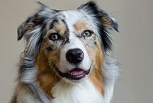 Domesticated Canines / by Sherrie Fuscone