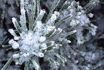 Puutarhakirja talvella - My Winter Garden / Kuvia puutarhastani talvella. Turku Finland.