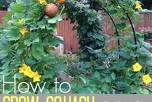 Backyard Homeschool Gardening with Kids / Tips, ideas, plants, recipes and more for home gardening