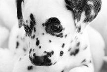 Cute Doggies / by MacKenzie Hatch