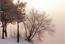 Naturaleza / La naturaleza en su estado más hermoso
