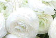 FLEURS / Flowers