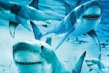 Every week is Shark Week! / by BHL