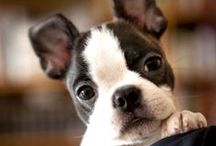 Pets / by FrugalFamilyTree Laura & Sam & Patricia