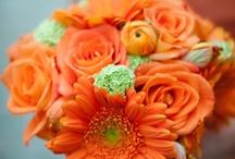 Orange and Grey Wedding Theme  / by Sara Smith