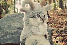 everything cats / by BreAnn Hayth