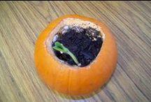 Pumpkins, Spiders, Halloween