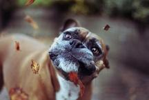 Dogs / by Jenny Harth