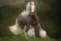 Horses, horses, horses! / by Jenny Harth