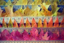 Autumn Leaves / by Mila Wain