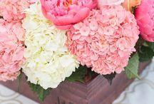 Flowers. / by Logan Dallas