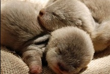 Will you be my otter half? / by Jessa Wiles