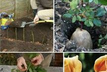 GARDENING | Resources