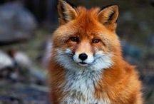 n a t u r a l l y / Animals & Nature