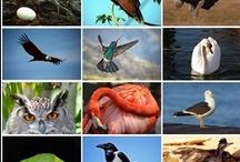 Birds/Pájaros / Son, junto con las flores, los seres de la Naturaleza que más alegran nuestras vidas,con sus cantos y sus perfumes. / by Enrique Moraga Ramos