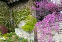 What's in Bloom: Spring / by Toronto Botanical Garden