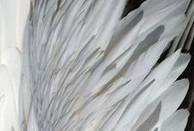 feathers   wings / Birds, butterflies, moths, and insects. Animals with wings and feathers.