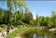 Toronto  | Edwards Gardens / One of Toronto's beloved public #gardens at Lawrence Avenue and Leslie Street (Mid-town) / by Toronto Botanical Garden